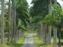 Cienfuegos Botanischer Garten